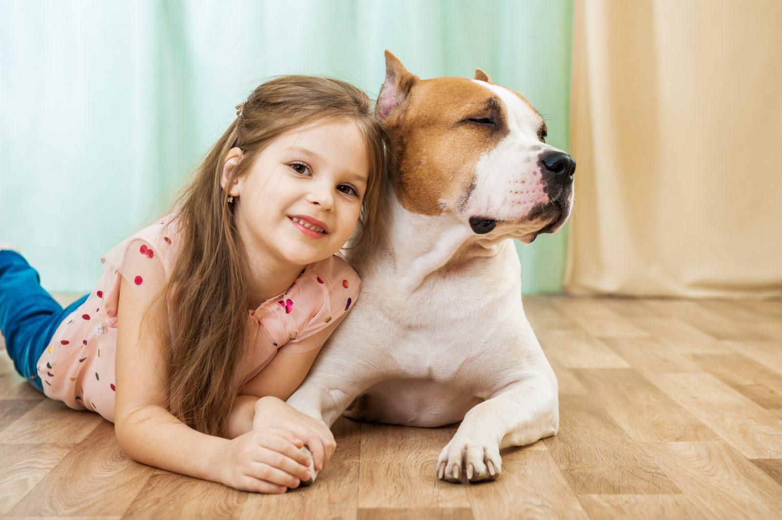 cao-staffordshire-terrier-temperamento