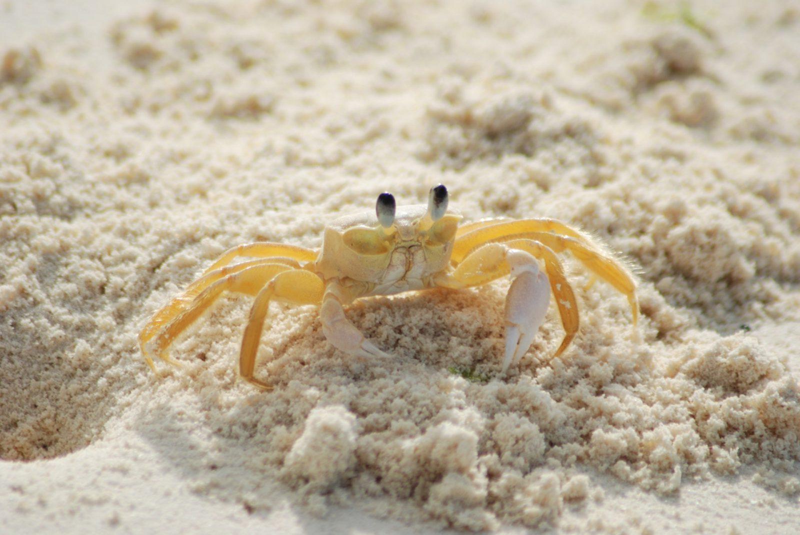O caranguejo possui muitas características e detalhes na sua estrutura.