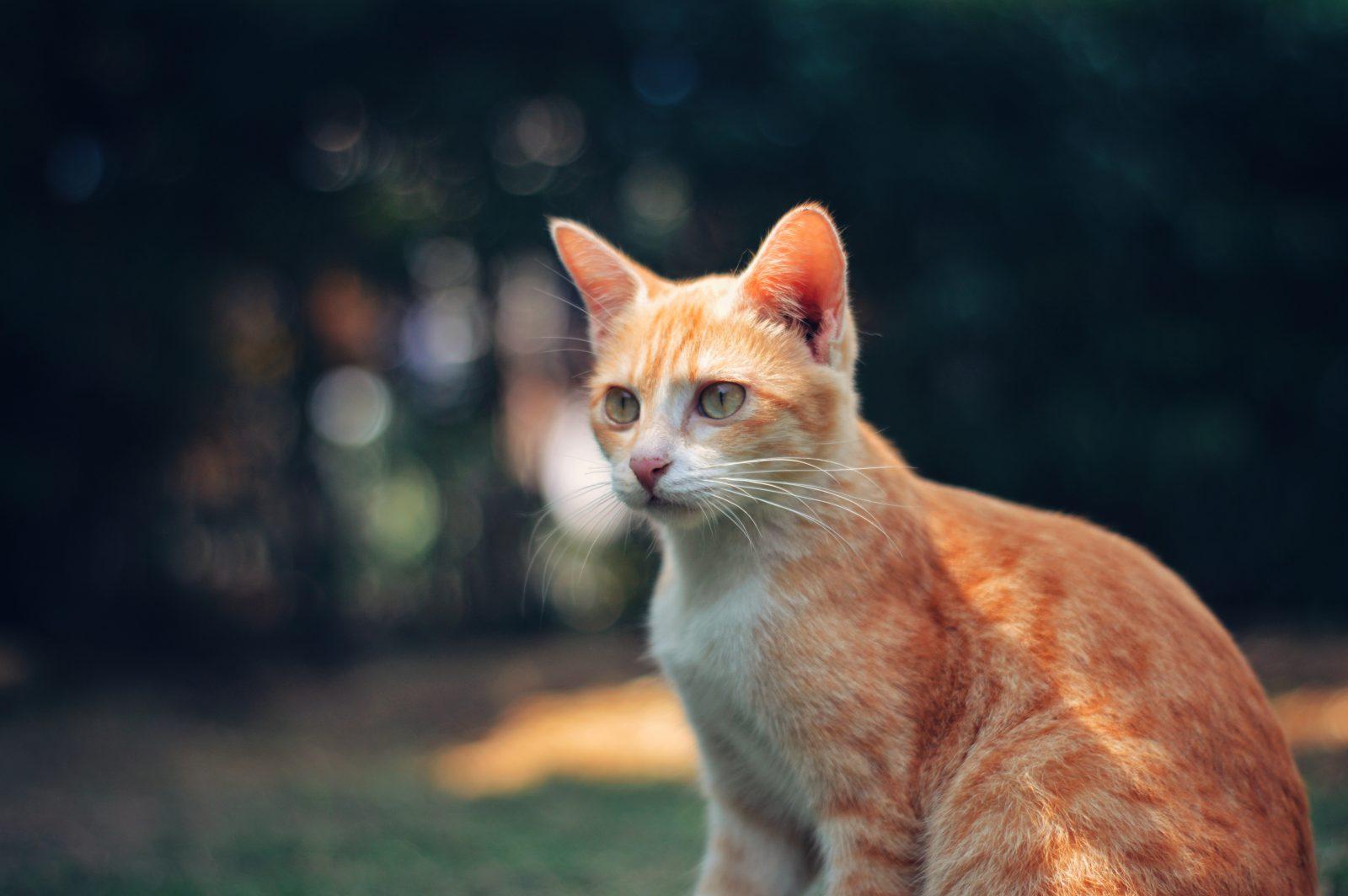 A casa para gatos deve obedecer alguns requisitos importantes.