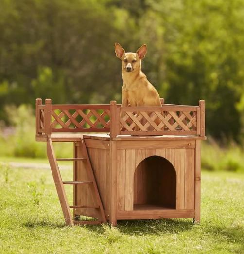 casinha de cachorro rooftop