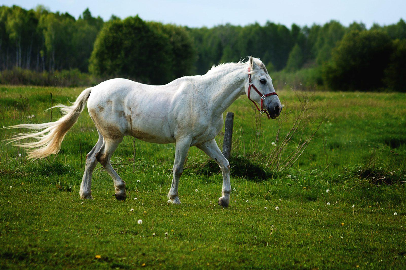 O cavalo faz parte da sociedade moderna de diversas outras formas.