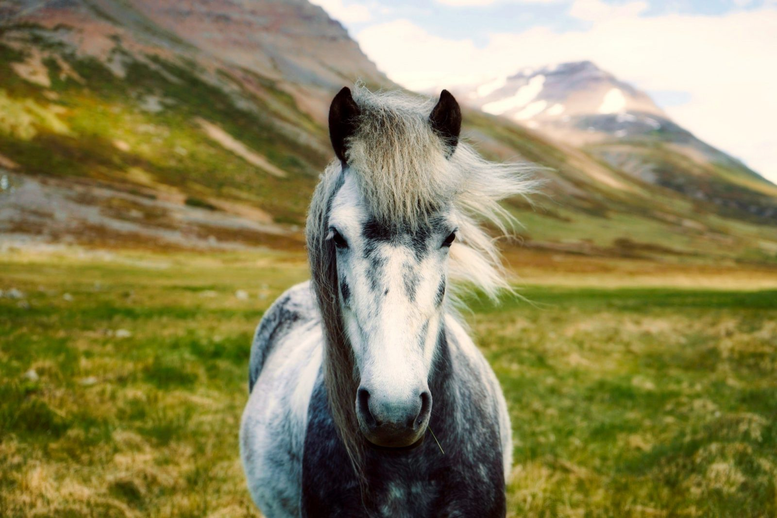 Na sociedade moderna o cavalo deixou de ser instrumento de trabalho.