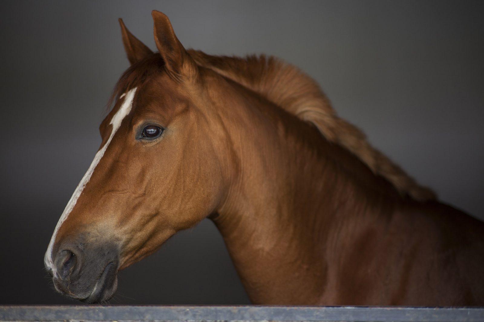 O cavalo foi fundamental para o desenvolvimento do homem.