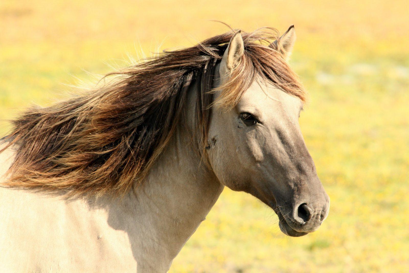 O cavalo sempre viveu em harmonia com o homem.