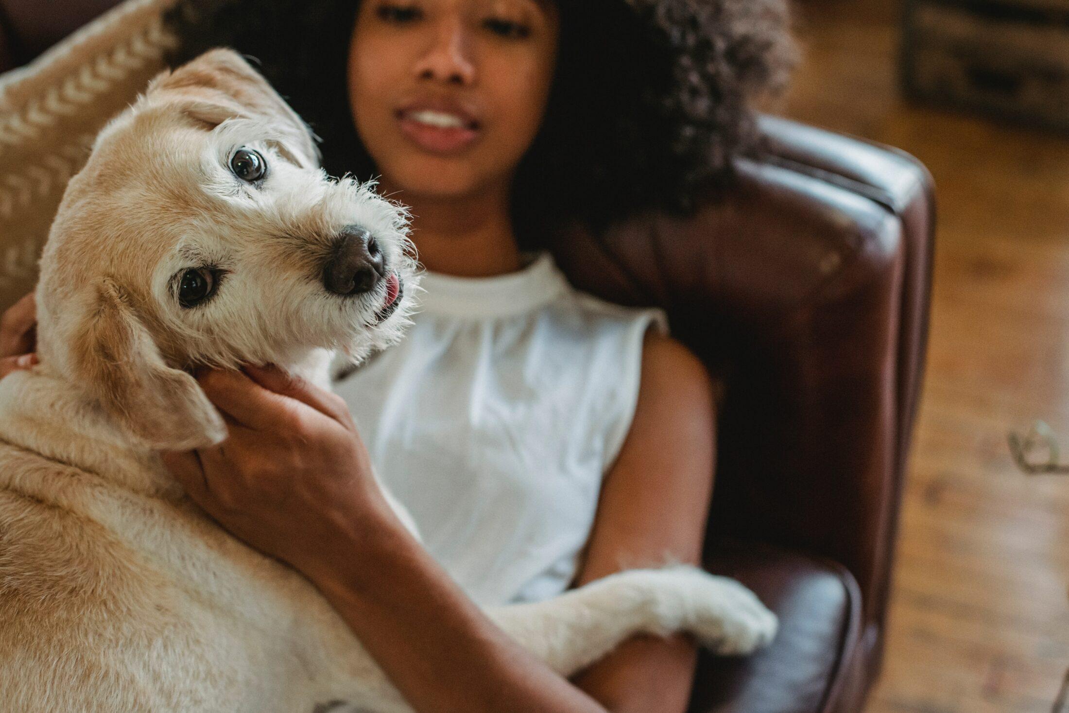 O cheiro de cachorro ruim pode ter várias causas.