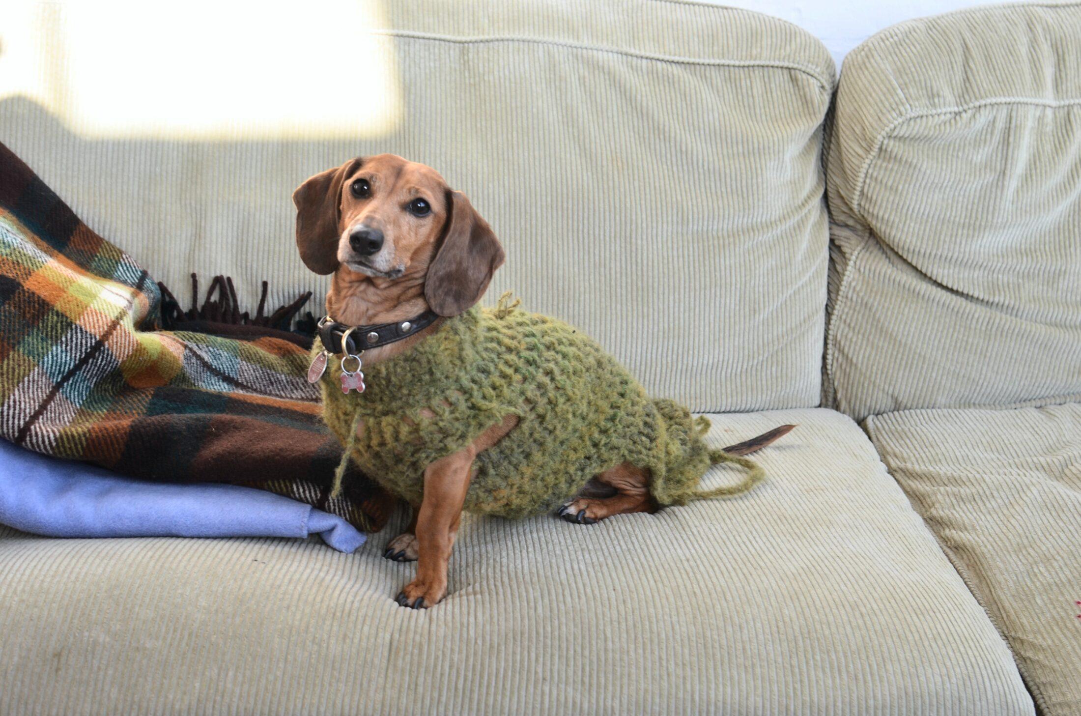 O cheiro de cachorro pode impreganar sofás, almofadas e tapetes, mas pode ser eliminado.