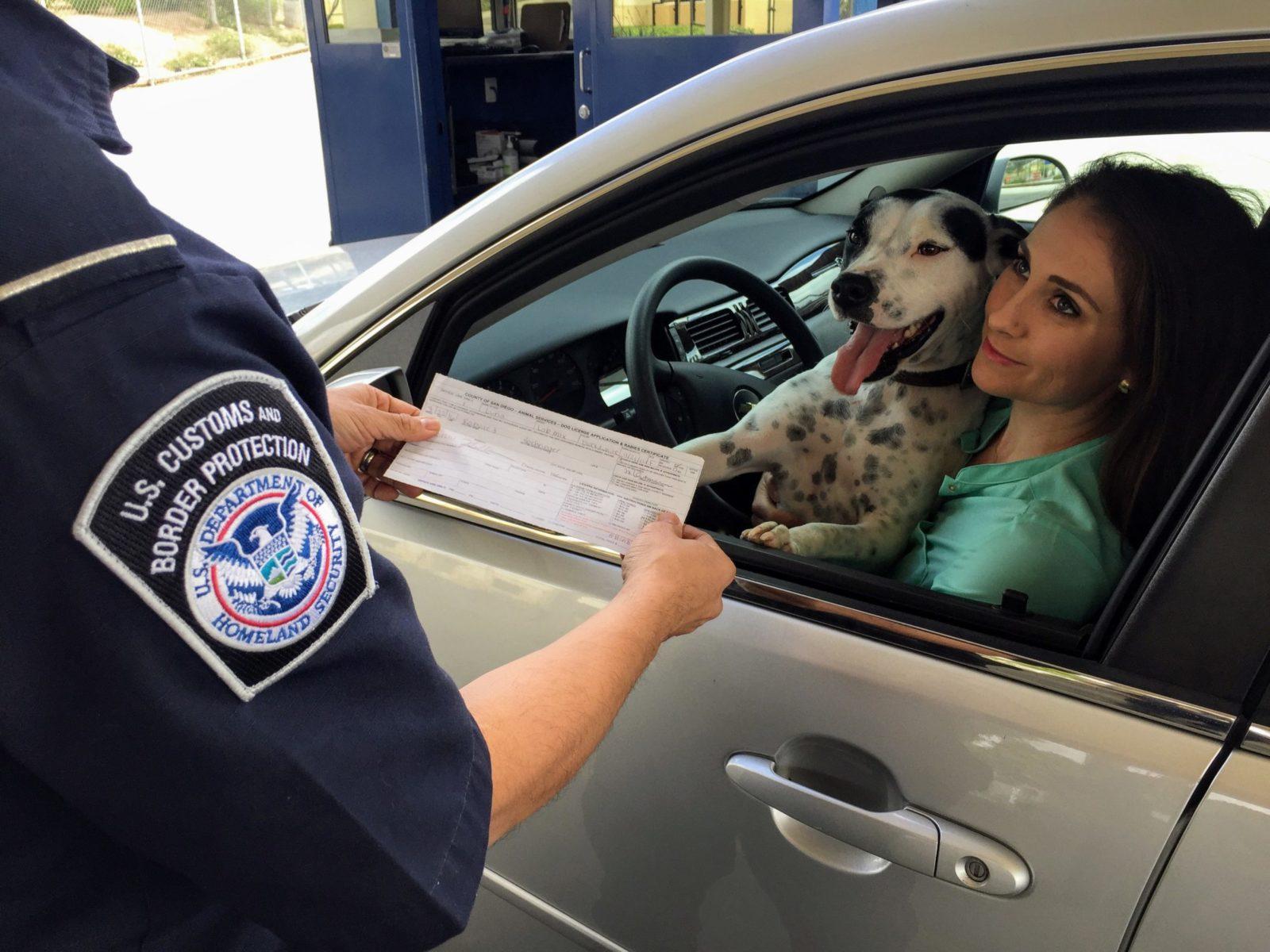 mulher trasnportando cachorro sem cinto de segurança e levando multa de um policial