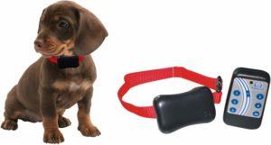 melhor coleira para cachorro eletrônica Site Lite Amicus