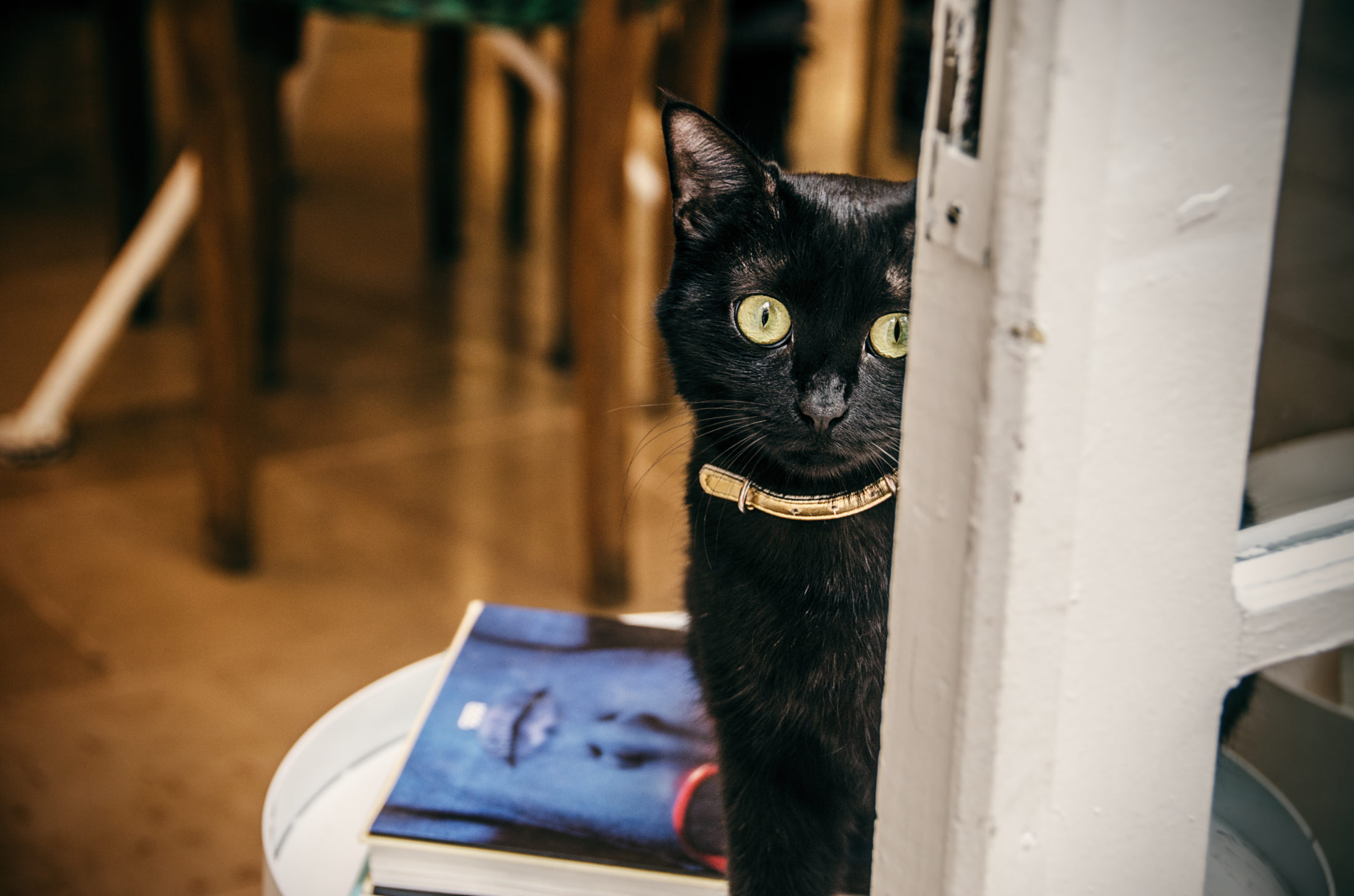 coleira para gato preto