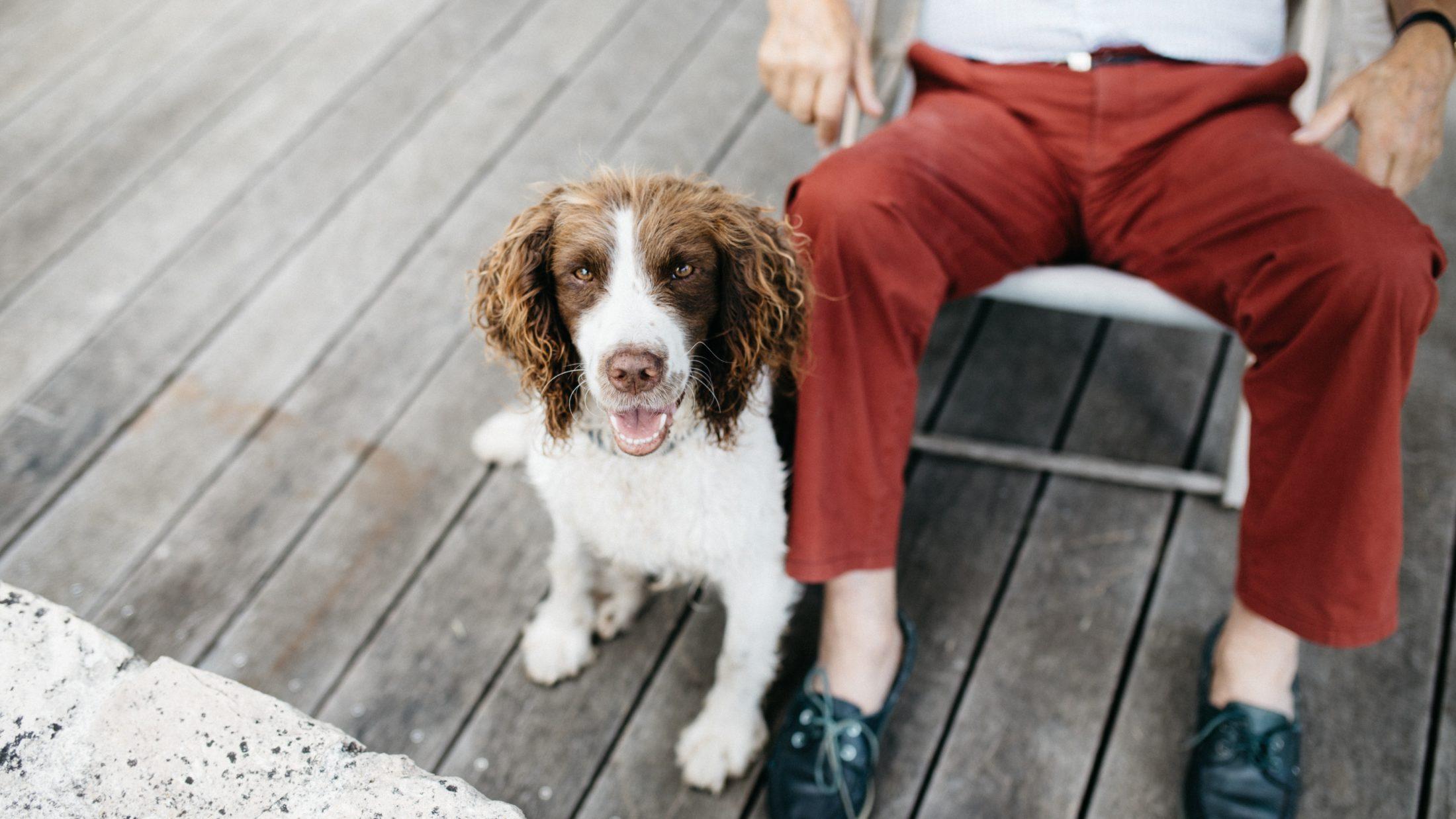 cachoror sentado ao aldo do dono mostrando que aprendeu a ocmandos básicos de treinamento de ficar parado