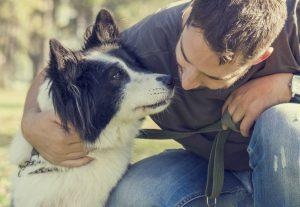 como-adestrar-cachorro