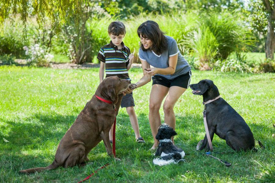 como-adestrar-cachorro-socializacao