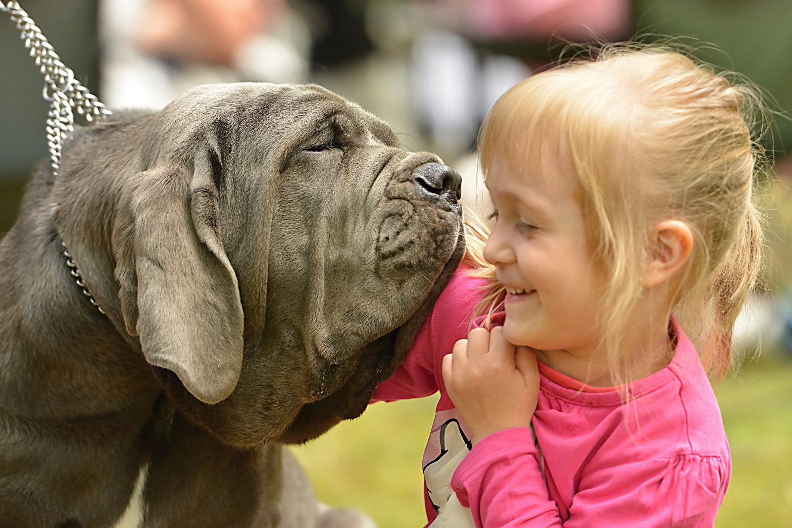 Como diminuir o estresse: criança abraçada ao seu amigo gigante Mastife Napolitano.