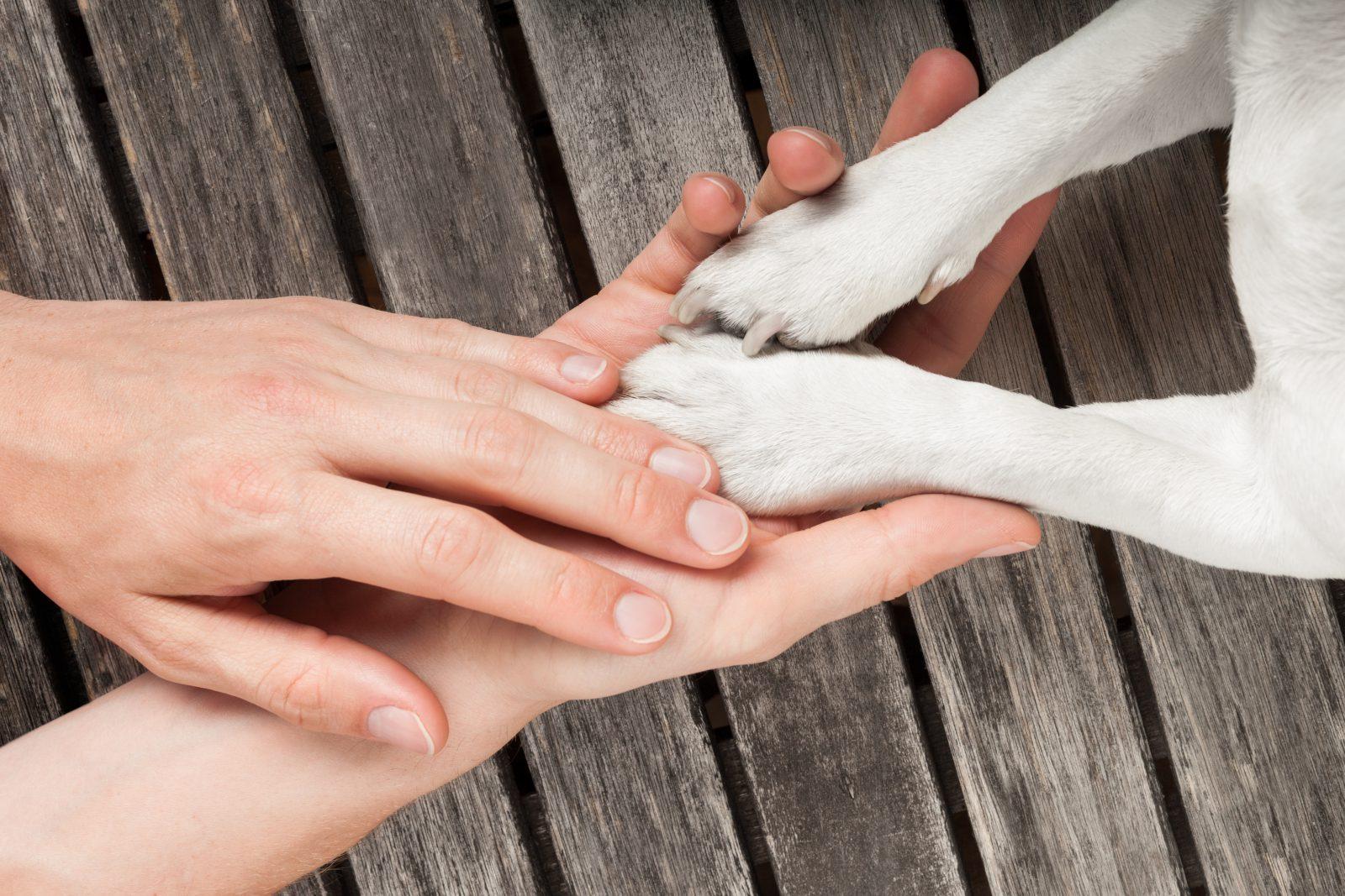 como cortar unha de cachorro: moça segurando patas do cachorro.