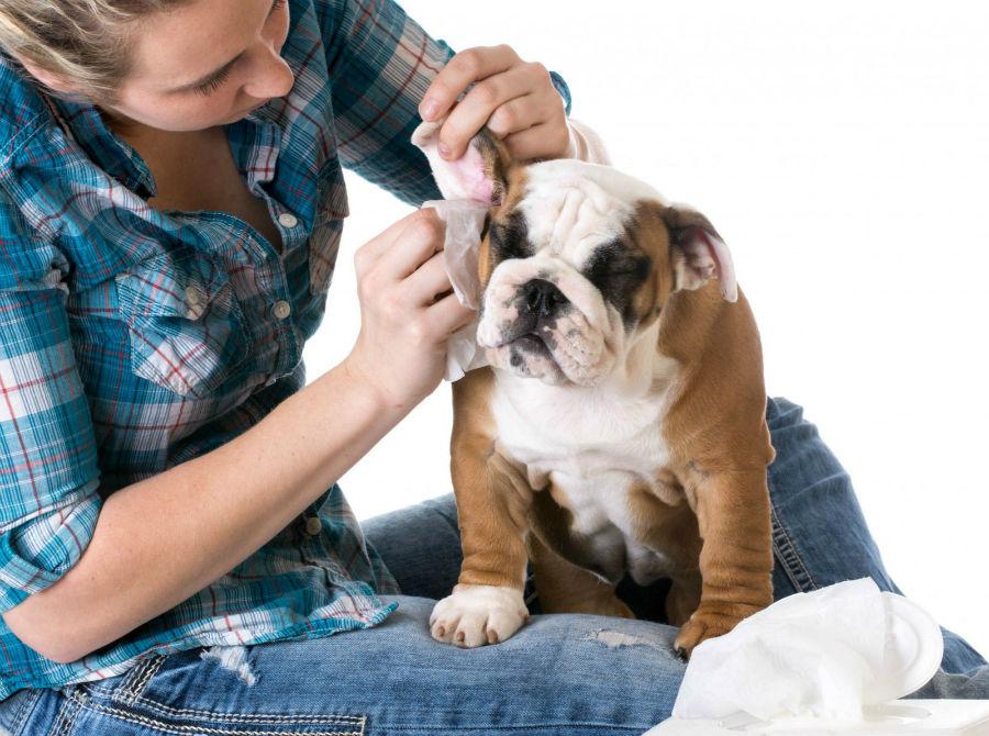 como-cuidar-cachorro-orelhas