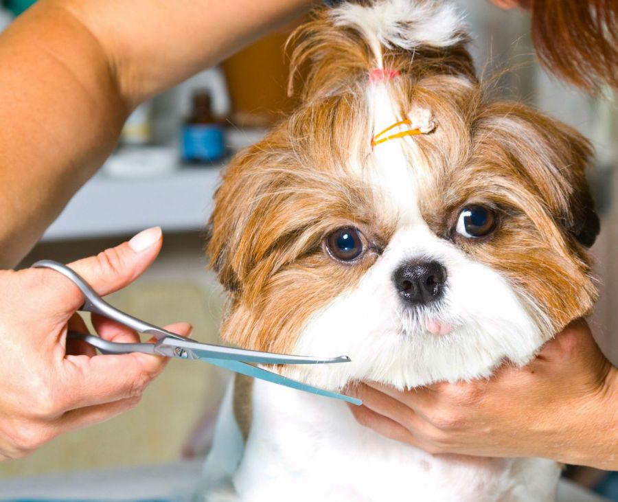 como-cuidar-cachorro-pelagem