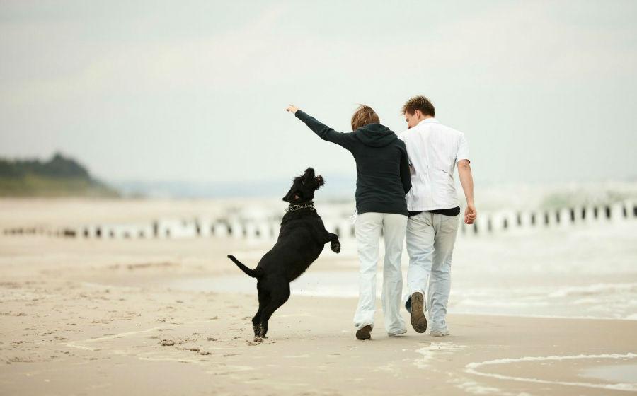 como-entender-cachorro