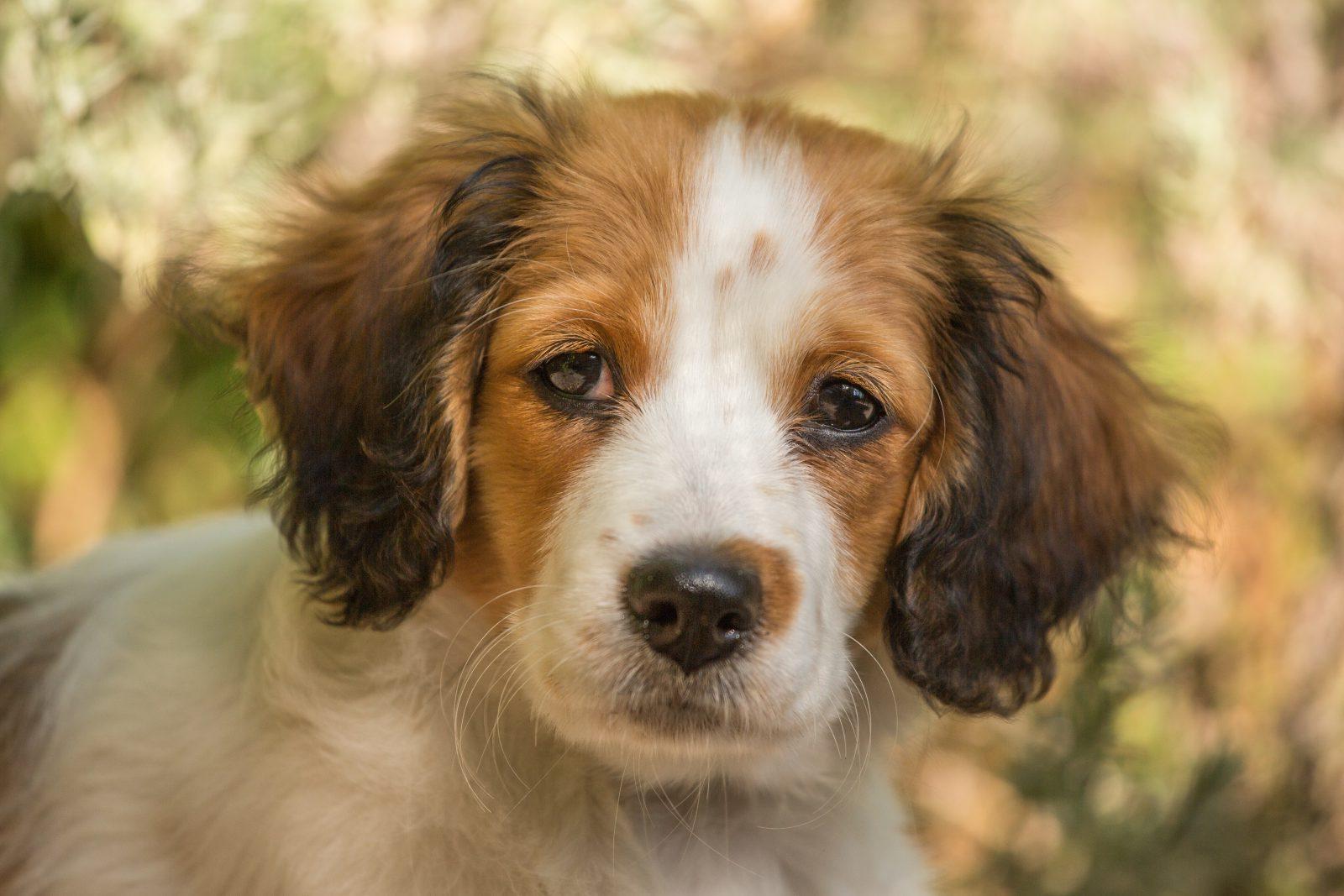 Cachorro morto: filhote de cachorro marrom e branco