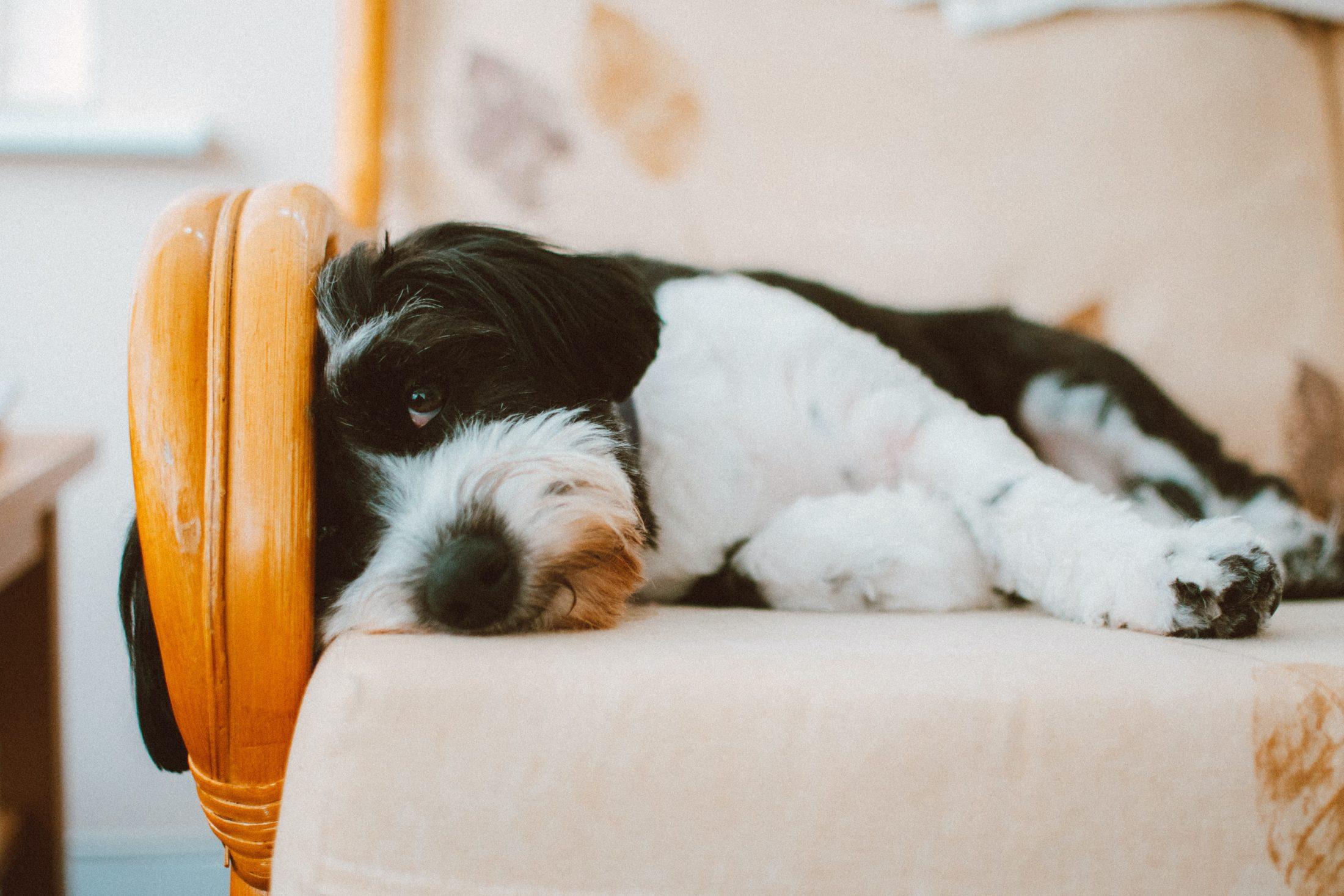 A ansiedade por separação é um comportamento animal que pode ser evitado.