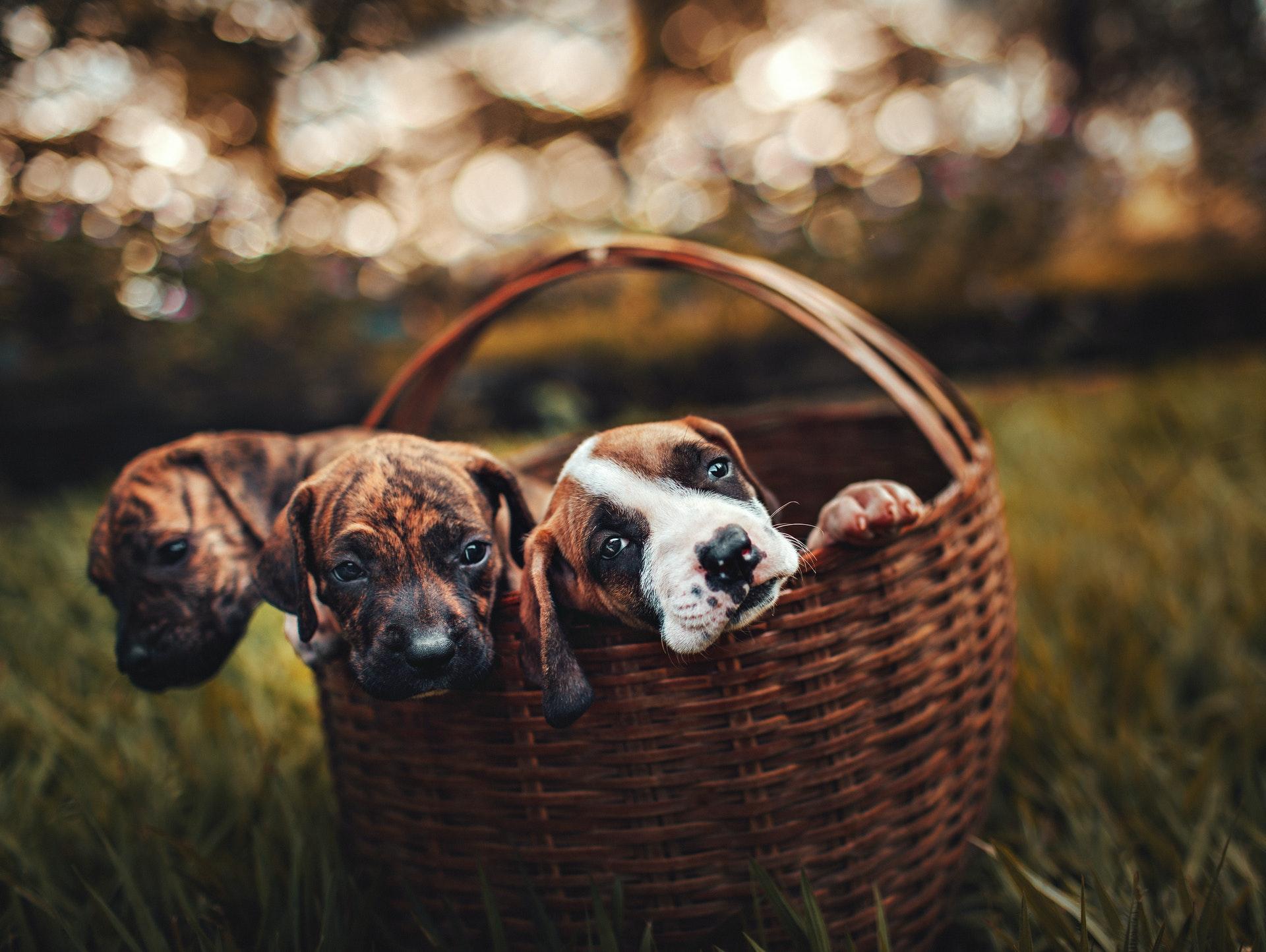 cachorro para comprar de criadores
