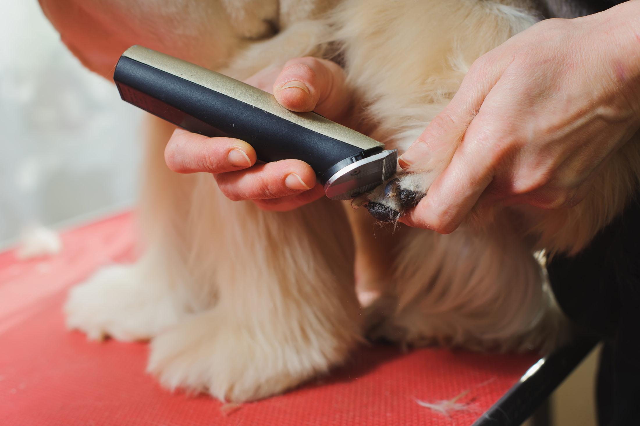 aparando pelos e unhas do cachorro em tempos de corona vírus