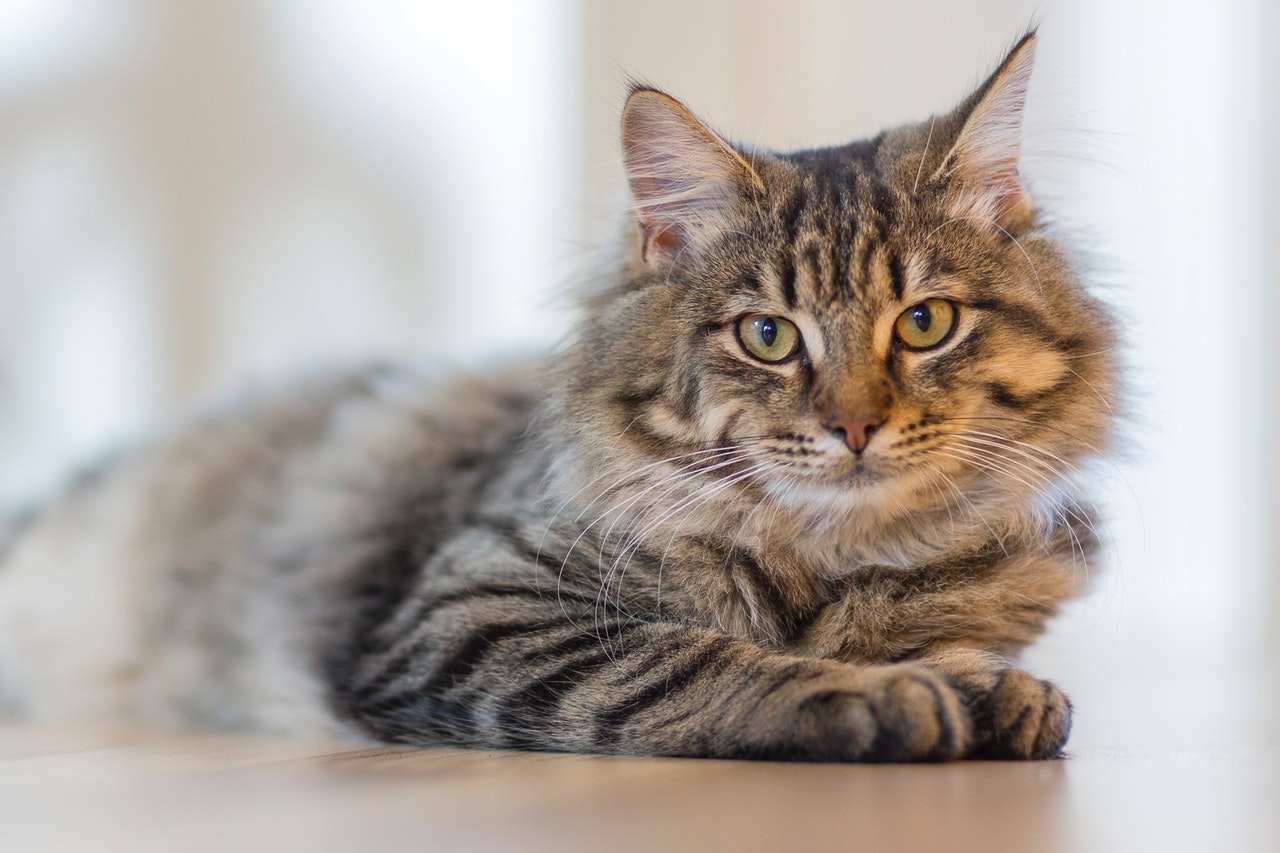 corona virus - manutenção do animal em casa