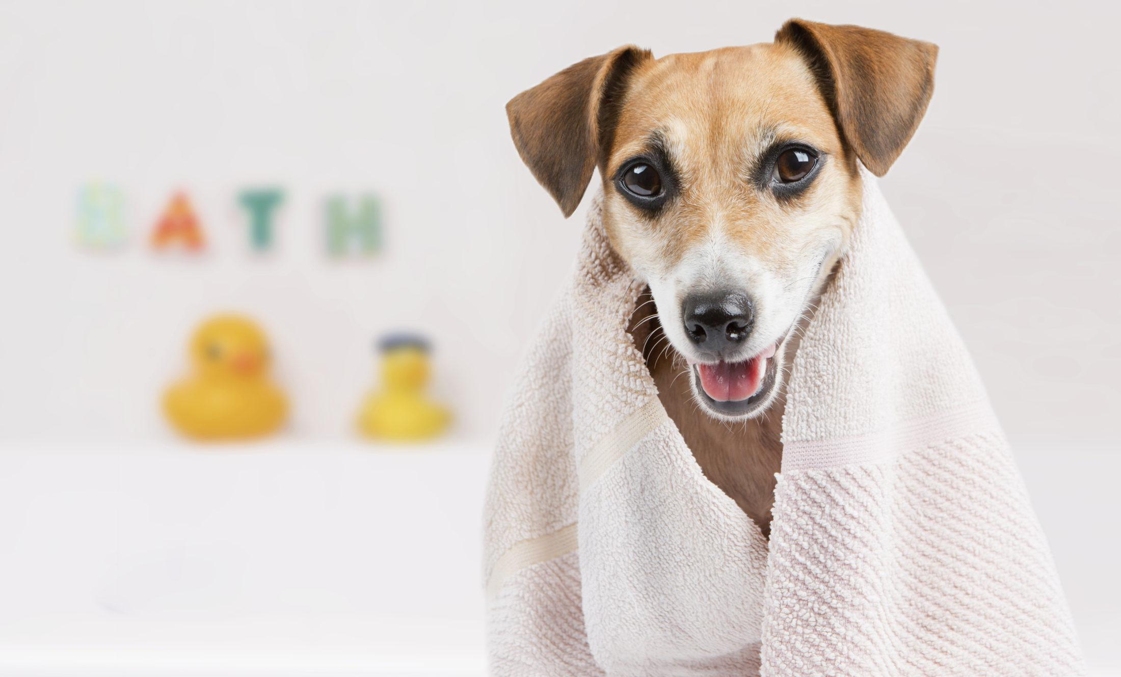 cuidados com animal de estimação