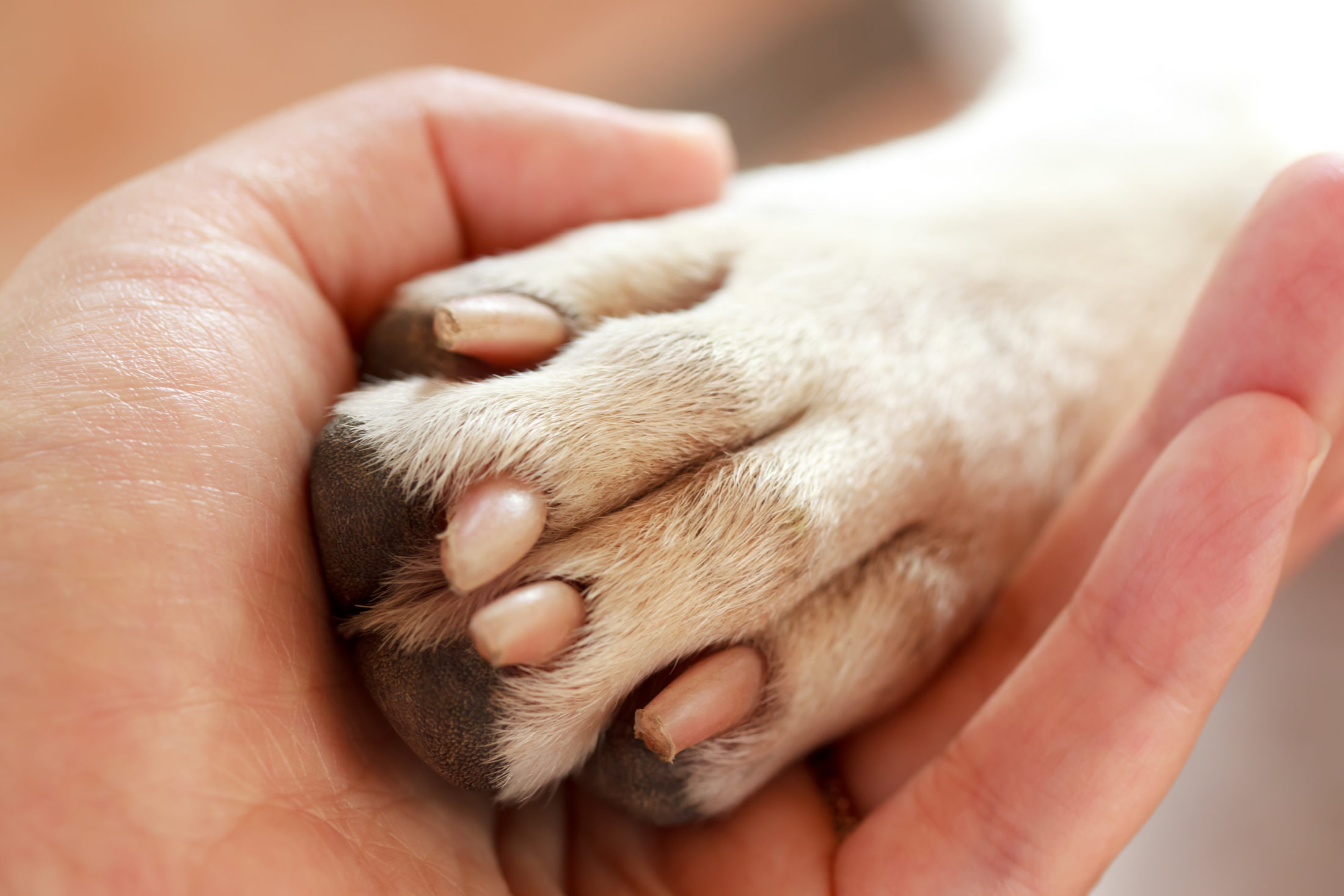 Dentre os cuidados com animal de estimação, crtar as unhas é o mais difícil.