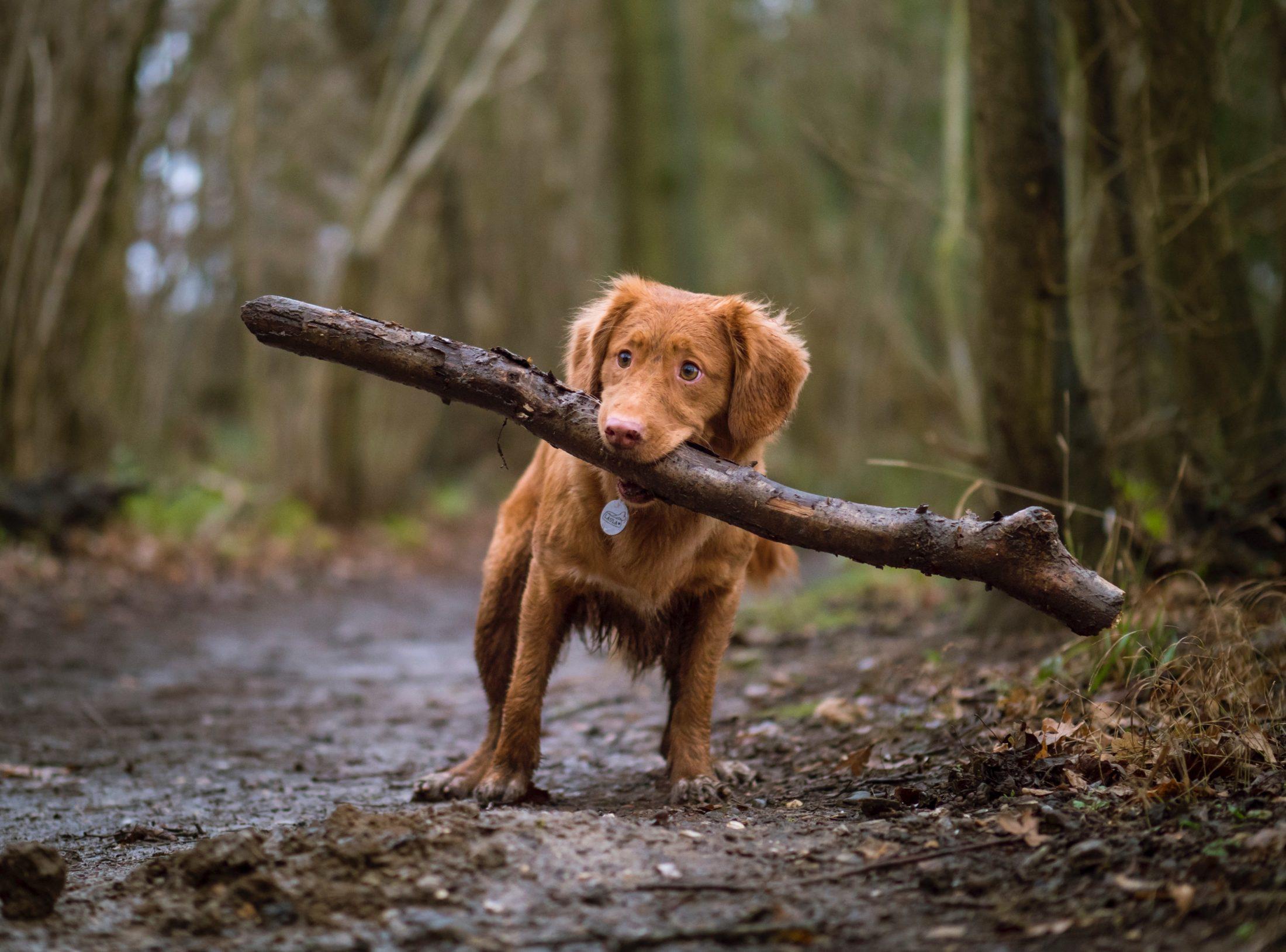 cuidados com cachorro: exercícios físicos