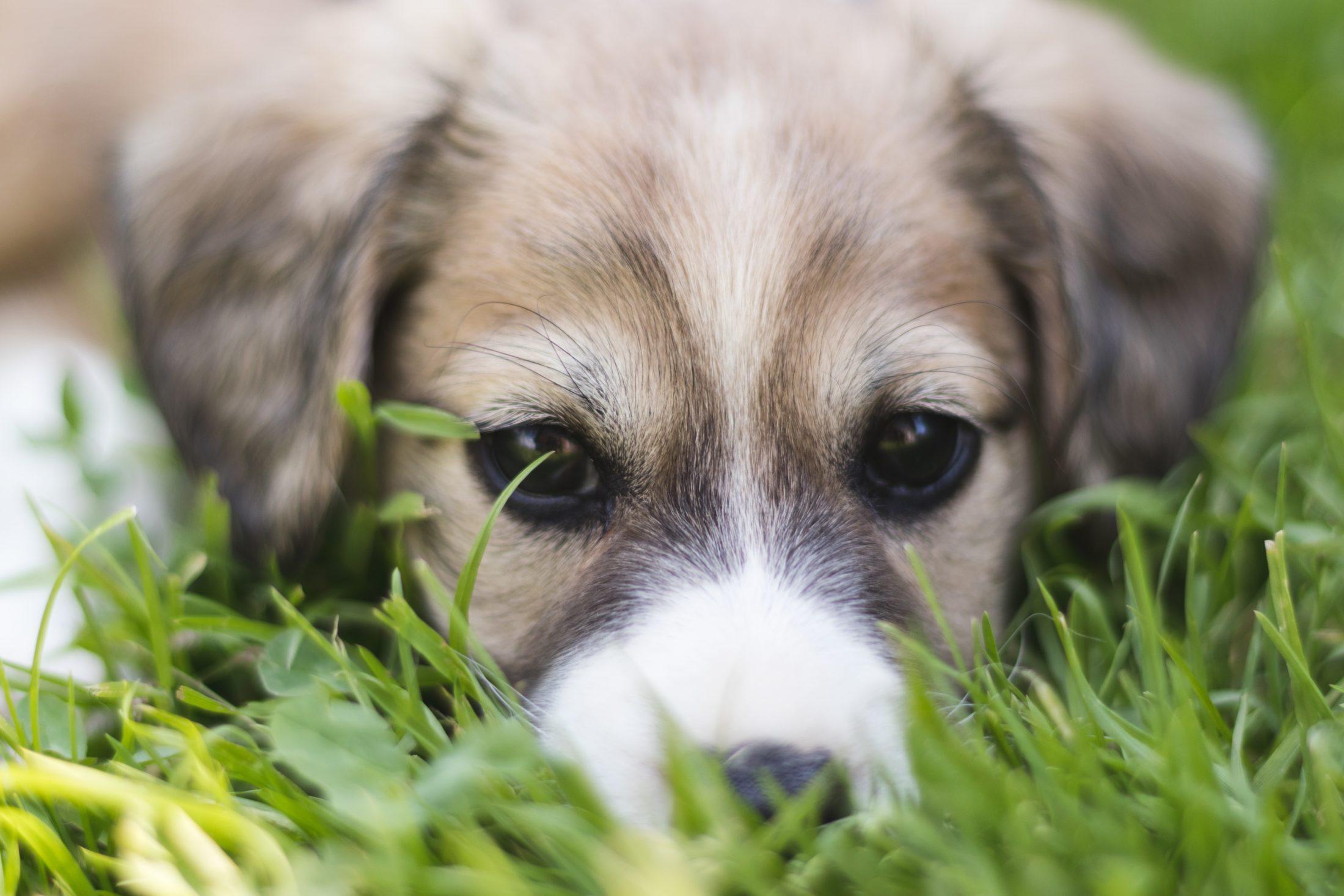 cuidados com cachorro: plantas tóxicas