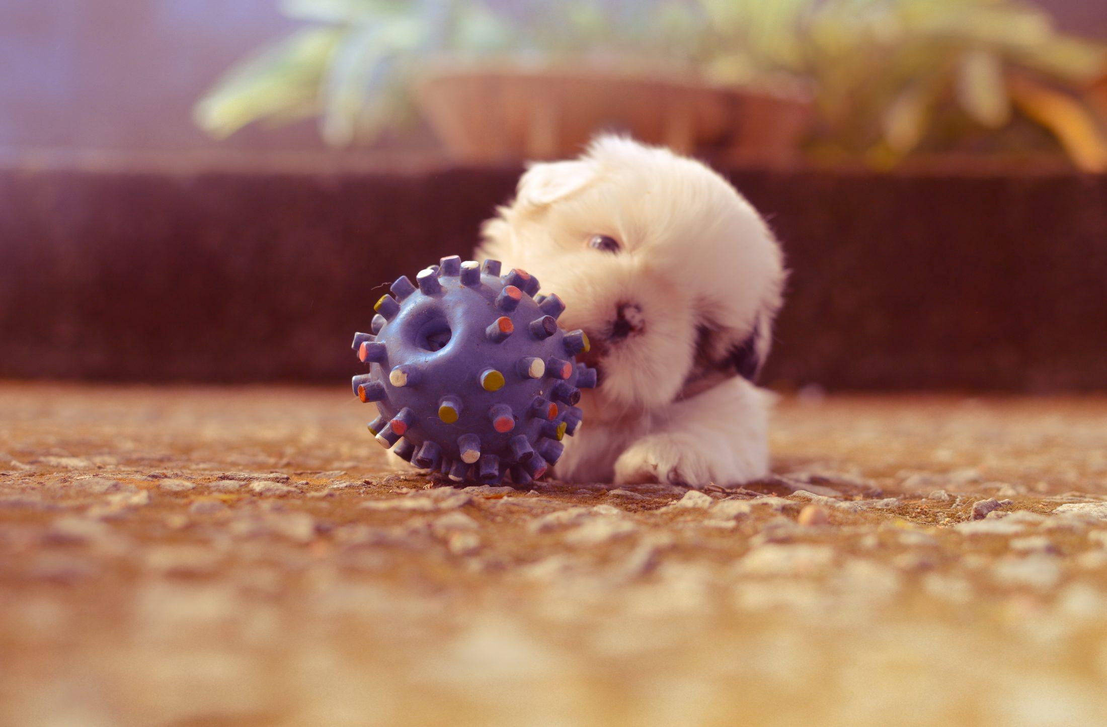 filhote de cachorro brincando com bolinha no chão