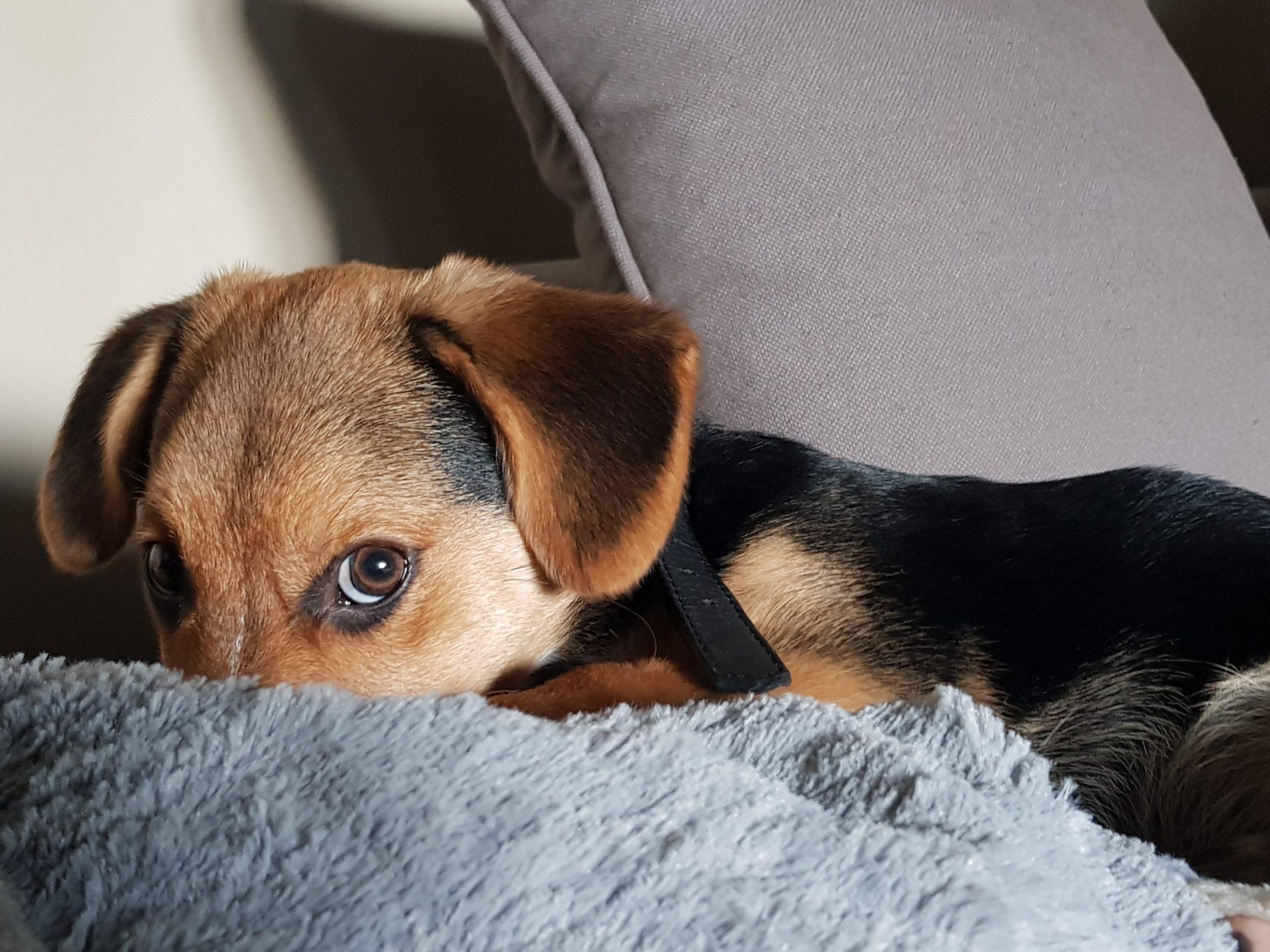 A socialização é uma das coisas mais importantes nos cuidados com filhote de cachorro.