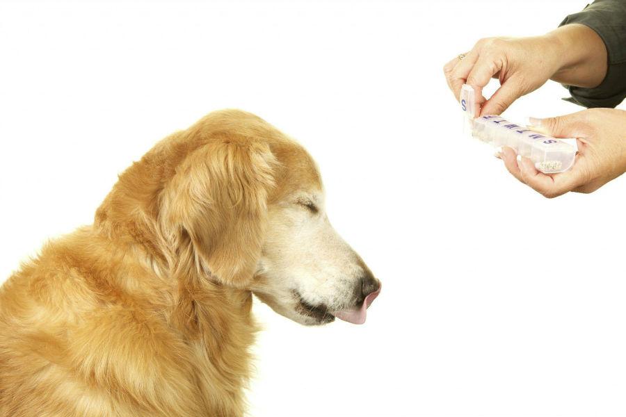 Cachorro doente engolindo comprimidos