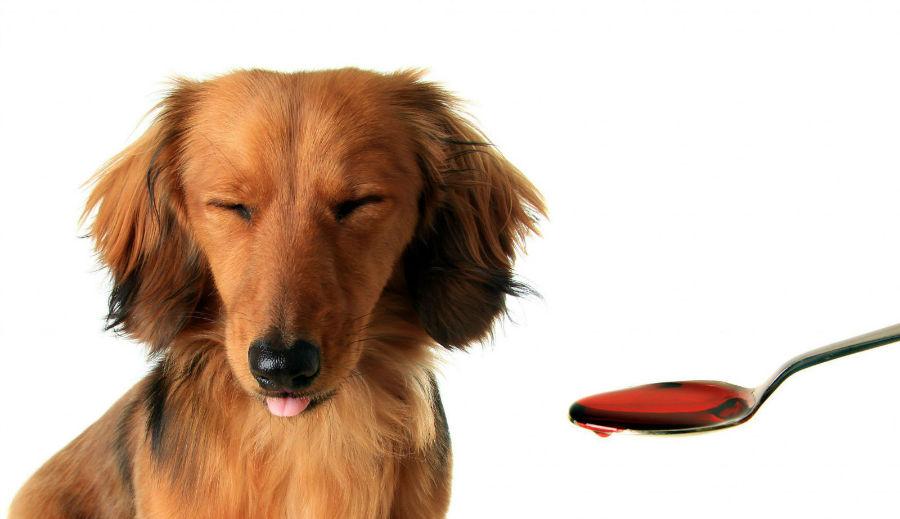 Cachorro doente fazendo careta para tomar xarope.