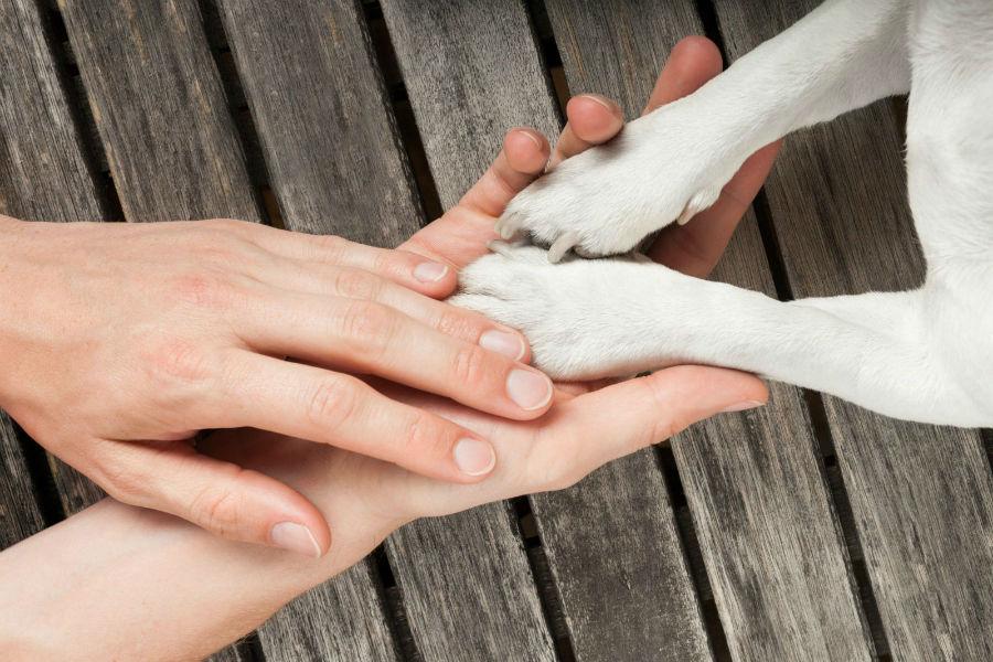 Pata de cachorro: Dona checando as patas do seu cachorro