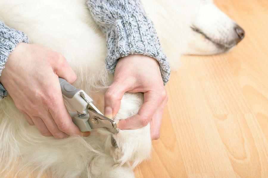 Pata de cachorro: Cachorro aparando suas unhas