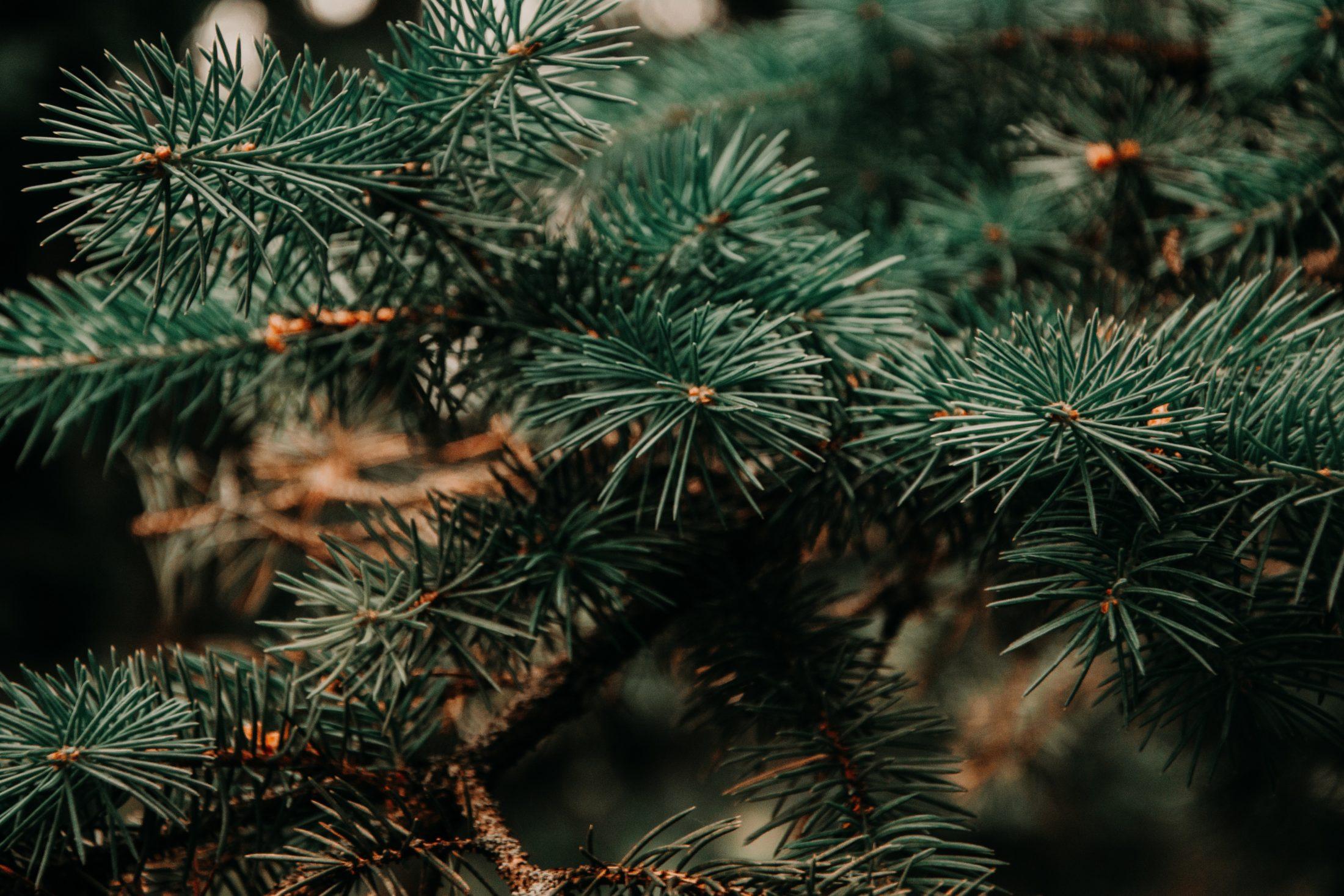 decoracao pet - plantas toxicas