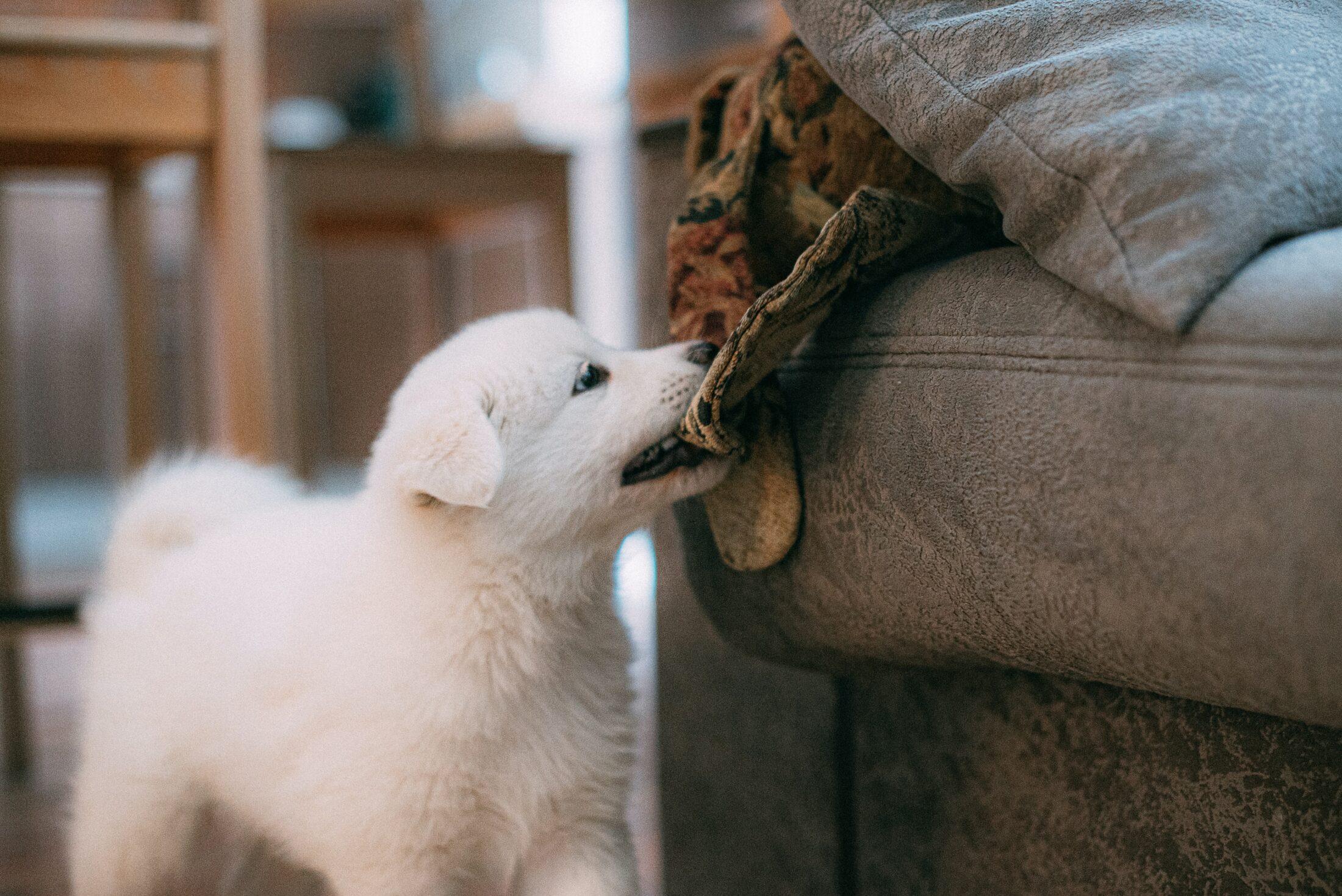 Despesas com pets incluem conforto e segurança, além de reposição de obejtos destruídos.