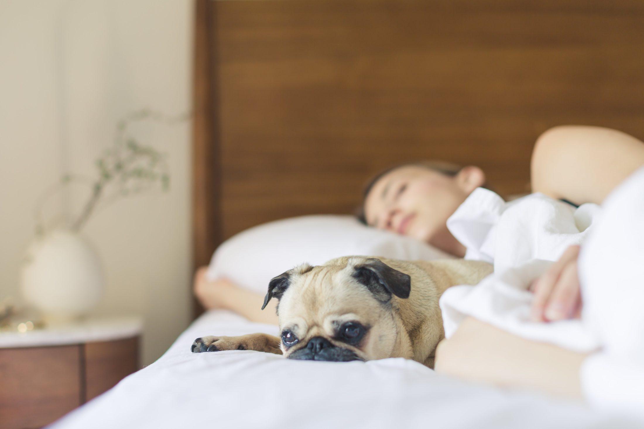 mulher dormindo na cama com Pug