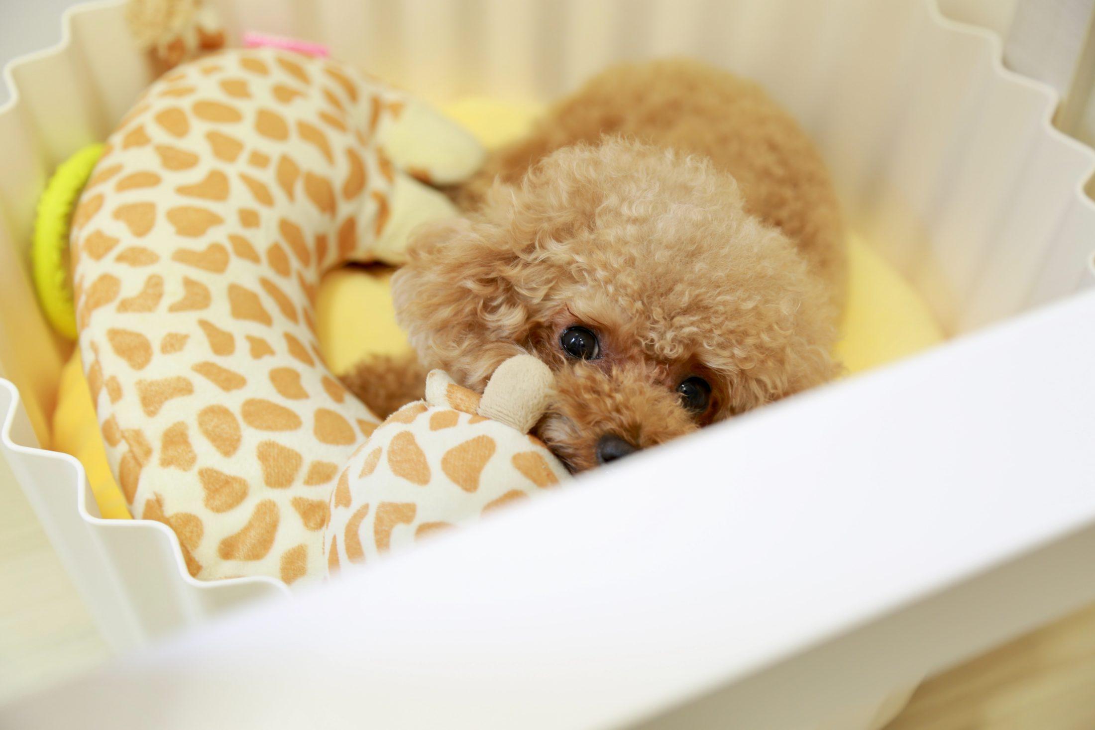 cachorro dentro de cesto de brinquedos
