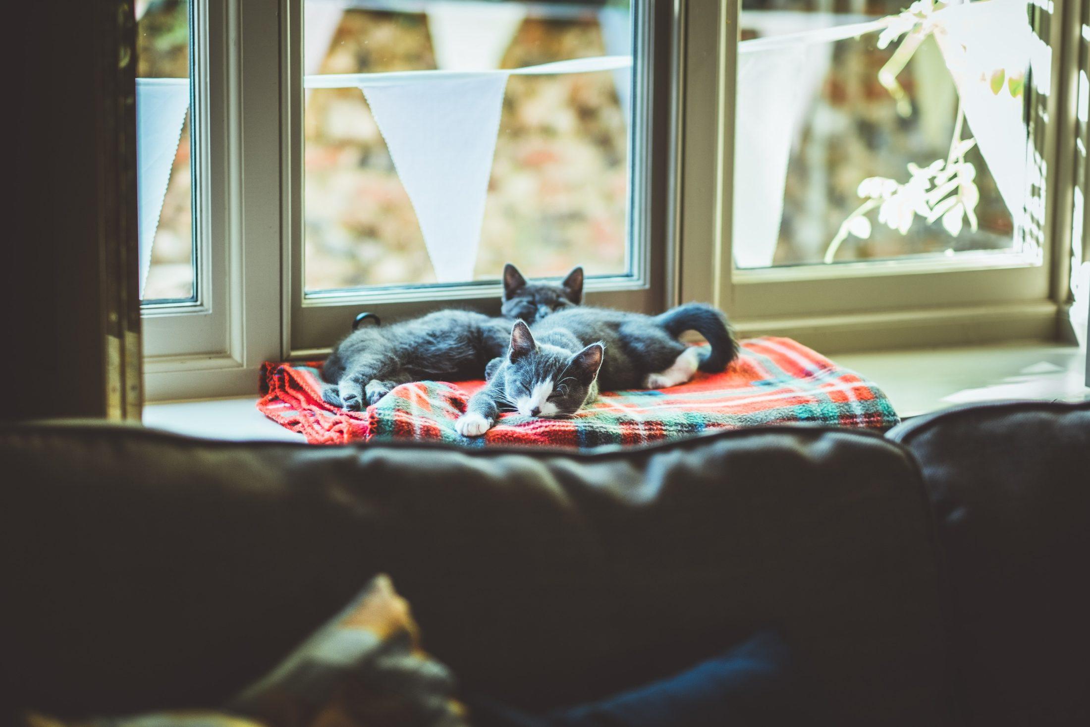 gatos deitados próximos à janela
