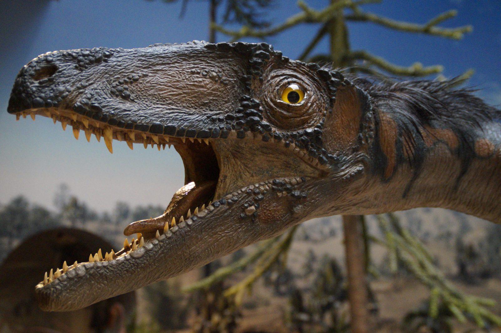 Os dinossauros possuem muitas curiosidades e despertam a curiosidade.