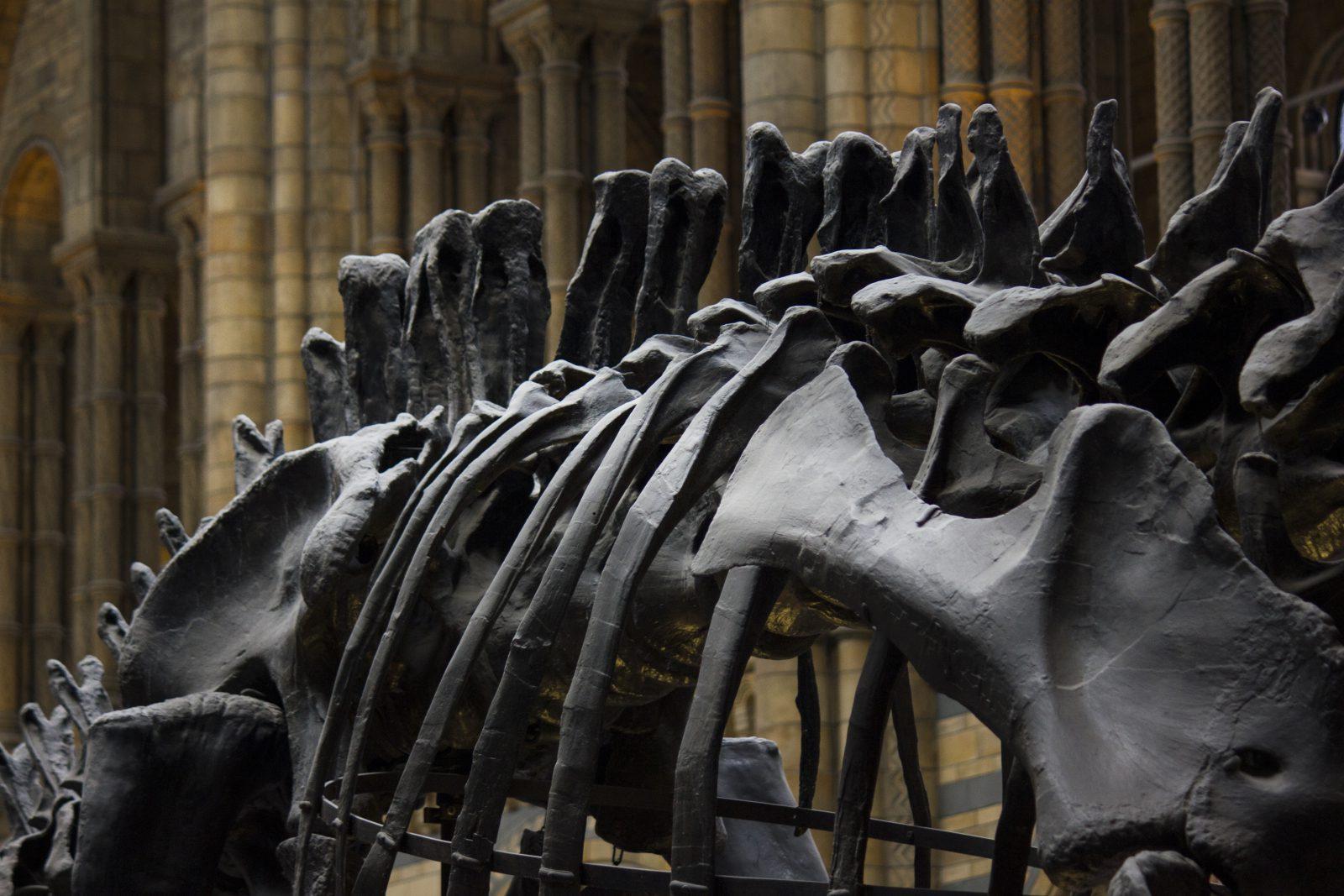 Fósseis de dinossauros foram descobertos recentemente.