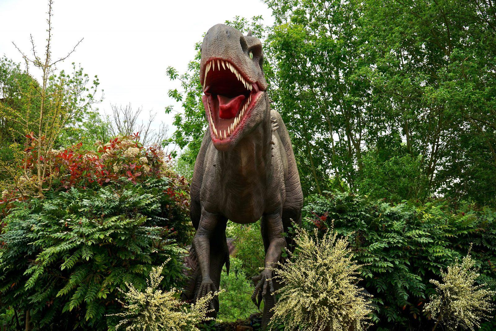 A paleontologia é a área que cuida dos dinossauros.