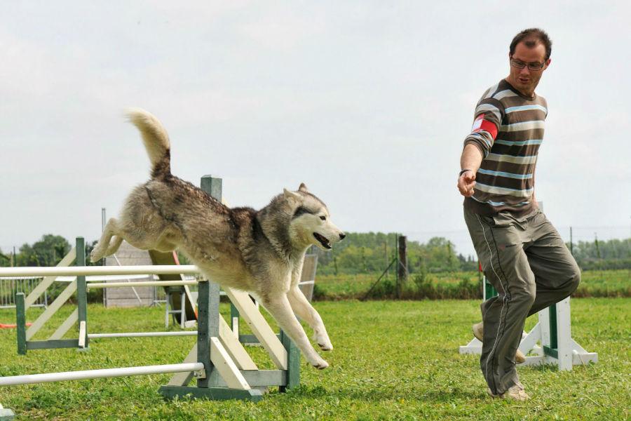 diversao-cachorro-exercicios-agility