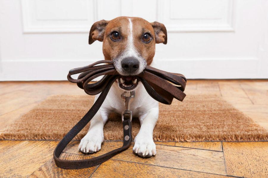 diversao-cachorro-exercicios-caminhada