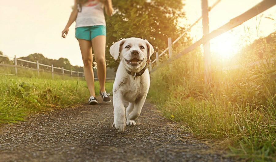 diversao-cachorro-exercicios-caminhada2