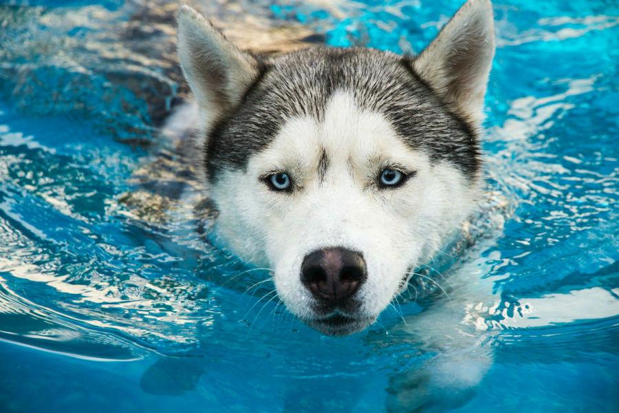 diversao-cachorro-exercicios-natacao