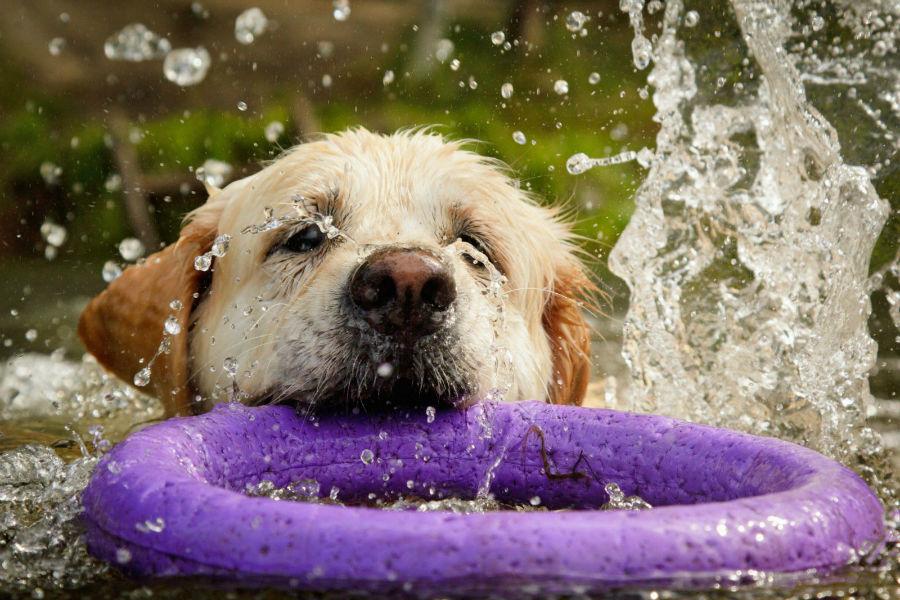 diversao-cachorro-exercicios