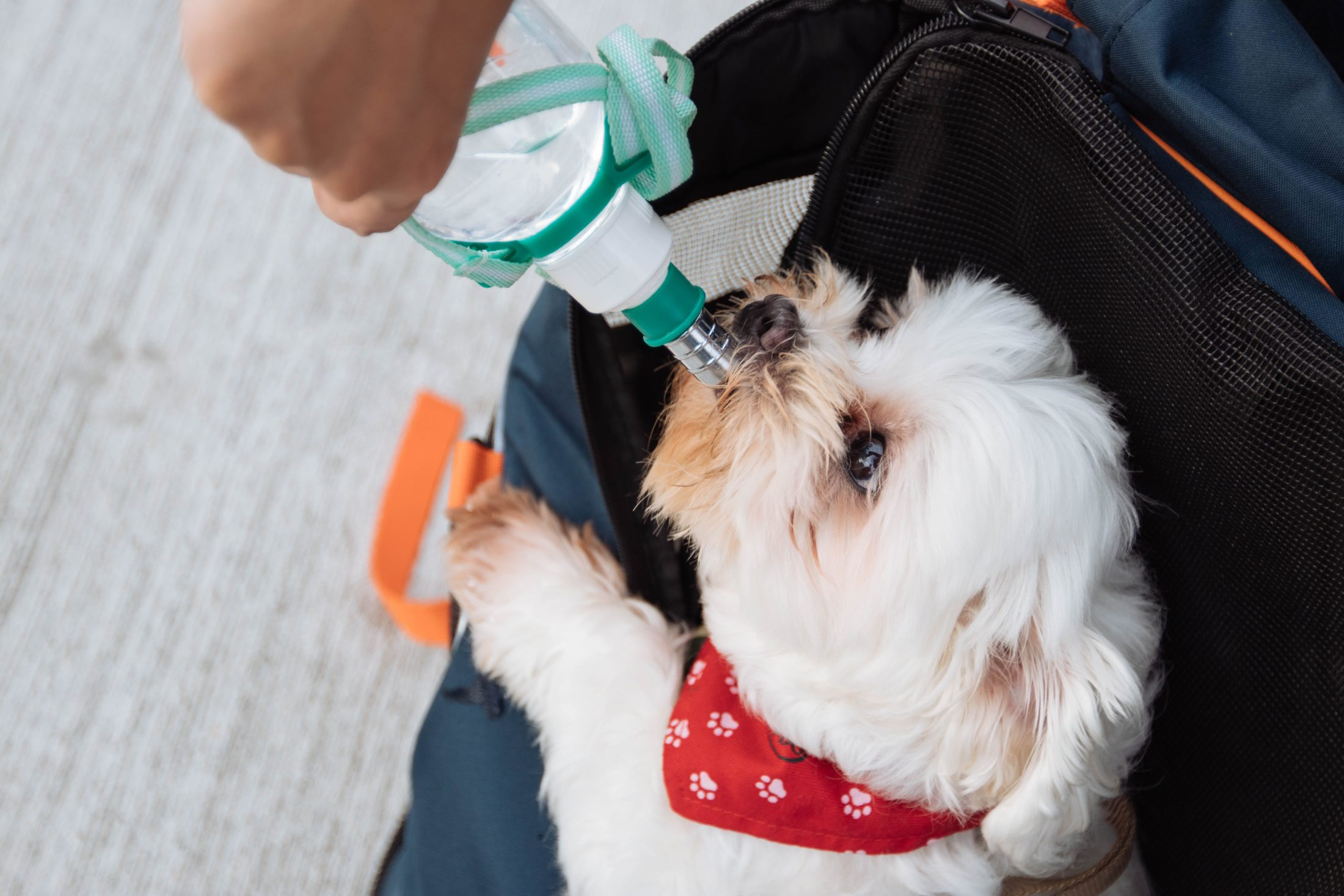 Beber água em excesso pode ser um sinal de desidratação ou outra doença de cachorro.